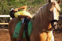 Equine paarden Therapie