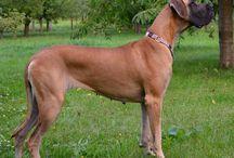 Abby Happy Chilli Dogs / Egisthe d´Iskandar x Zarah della Baia Azzurra