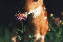 Animals / Animal  pics