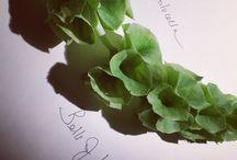 Green Hues, Foliages & Succulents