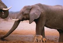 Botswana / by Eyes on Africa Safaris