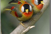Aves bonitas