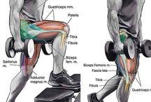 Quads Workouts