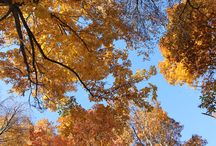 Autumn at Storybrook Farm Bed & Breakfast / Autumn is a stunning season at our farm. With it comes vibrant colors in the trees, crisp fall air, warm cozy fires, and delicious treats featuring the autumn harvest from our fruit orchard. Stop on by for a visit!