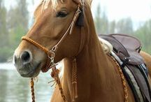 horsies
