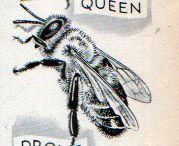 Honeybee artwork