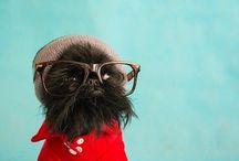 Dogs / by Olivia Dawkins