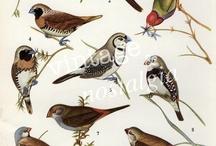 Bird prints /  Птицы в рисунке