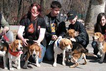 About us  -  Beagle Rescue Hungary / A BEAGLE-ért Közhasznú Egyesület gondozásában lévő kutyusok. Adoptable Beagles.