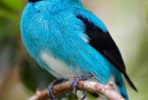 Birds / by Michelle Messemer