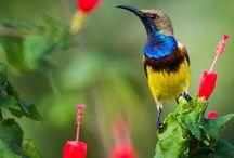 Australia: Native birds