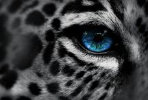 Beautiful Animals!