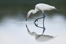 Southwest Florida Birds / A collection of various bird in Southwest Florida