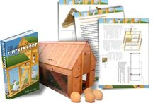 Chicken Coops / Great Chickens need perfect chicken coops