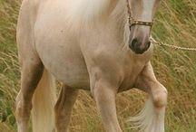 Tara horses