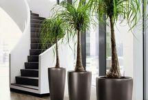 plantas y trucos caseros