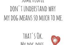 Dogs❤️