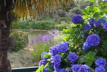 Parcs et jardins de Haute Bretagne / Parcs et jardins de Haute Bretagne en Ille-et-Vilaine (France).