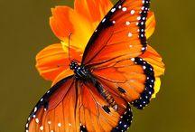 Butterflies / by Deb Coleman