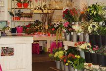 Onze Winkel / Een indruk van onze winkel aan de St. Jacobslaan 21 in Nijmegen