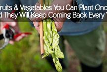 Making Gardening Easy