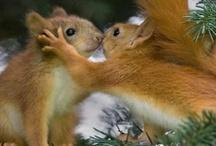 Luonnon ystäviä