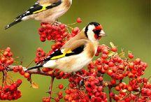 Madarak / Környezetünkben élő madarak.