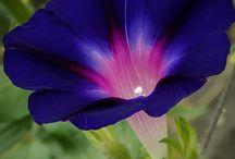 flowers / by Nadine Neis