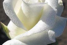 розы / Красивые отборные цветы, образы для исполнения в камне