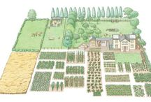 the vegetable farm