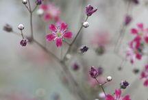 фотоцветы