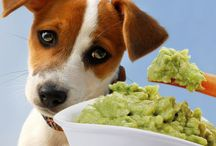 Foods Your Dogs Should Never Eat / A list of foods that are dangerous for your dog. Read and educate yourself so your pet stays healthy, alive and kicking!