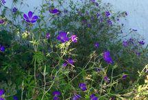 Min trädgård / Odla ätbart, naturlig trädgård, giftfritt, för djur, för barn, zon 3.