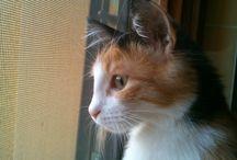 le nostre gatte Maggie e Aurora