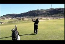 CCGT Course Videos / A board dedicated to videos from our golf courses and resorts.