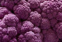 purples + lilacs