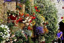 Outdoor flowers