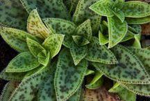 Plantas / by Nereida Sales Naves Alves