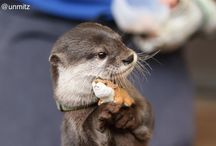 Otters><