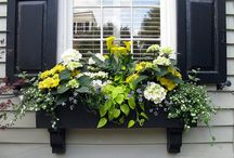 Window Boxes with Style