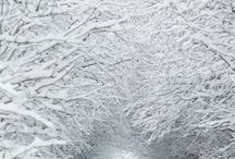 4 seasons-Winter