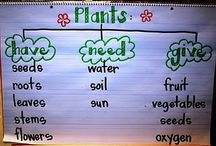 School~Plants / by Nicki Thompson