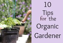 Organic gardening  / Gardening tips  / by Brenda Royal Draper
