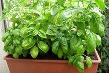 piante aromatiche e ...
