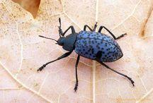 Beetles & Bugs / by Helen Correll