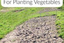 Preparing to grow veg