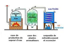 Huiles essentielles : culture, distillation / Essential oils : distillation, botany, agriculture...