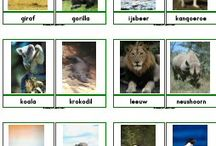 zvierata foto