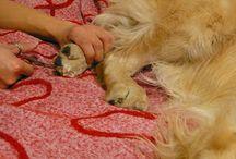 Hunde og andre dyr / Billeder af søde hunde