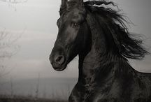 Horses / by Lize Hendriks